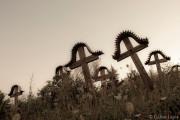 Régi temető Máréfalva