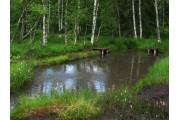 Buffogó tőzegláp Bálványosfürdő,  Bálványosfürdő
