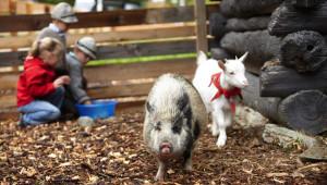 Vizitare fermă şi mângăiere animale