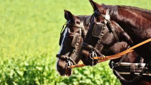 Tură gastronomică cu căruţă trasă de cai în Lăzăreşti