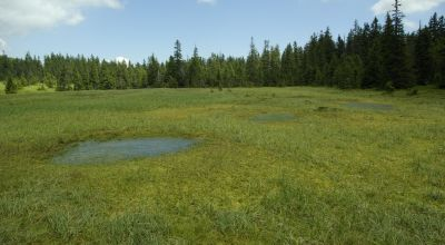 The Peatland of the Szökő Brooklet Racu